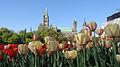 Parliament Hill (Centre Block) among tulips.jpg
