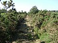 Path through the gorse by Rixafer Road, Ideford Common - geograph.org.uk - 1371532.jpg