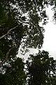 Perspektiven des Parque Nacional do Iguaçu 18 (22103450072).jpg