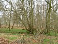 Petley Woods - geograph.org.uk - 152232.jpg