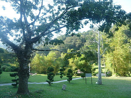 The Penang Botanic Gardens was founded in 1884 as an offshoot of the Singapore Botanic Gardens. Pg botanic gardens trees.JPG