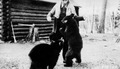 Photograph of Feeding Cubs at Campbell's Trading Post - NARA - 2128213.tif