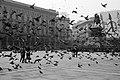 Pigeons - Piazza del Duomo, Milano, Italy - 1991.jpg
