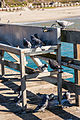 Pigeons on the Pier at Seacliff State Beach (11811642735).jpg