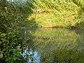 PikiWiki Israel 16524 The Yarkon springs.JPG