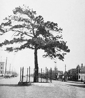 McAlester, Oklahoma - When this street in McAlester was paved in 1916, the city save this pine tree and built a fence around it