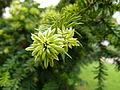 Plante du Jardin du Luxembourg 10.JPG