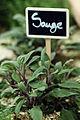 Plantes Aromatiques Cl J Weber05 (23651184826).jpg