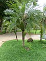 Plants at Queen Sirikit Botanic Garden - Chiang Mai 2013 2655.jpg
