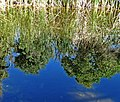 Pond Reflection, Living Desert 3-15 (16784256531).jpg