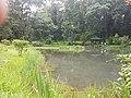 Pond View 20170706 160150.jpg