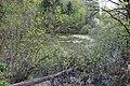 Pond near Meshkovo 02.jpg