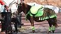 Pony. Waiting for a walk. Nizhny Novgorod.jpg