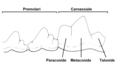 Premolari + Carnassiale.png