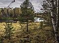 Prigorodnyy r-n, Sverdlovskaya oblast', Russia - panoramio (138).jpg