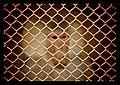 Prison - panoramio (4).jpg