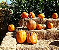 Pumpkins on Hay Bales (10386521505).jpg