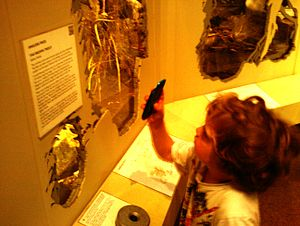 English: Child using QR codes in Derby Museum ...