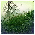 Queens Park, Glasgow, Tree reflection in puddle.jpg