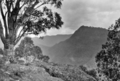 Queensland State Archives 409 Looking from Hunters Lookout across the Albert River gorge and Lost World Lamington National Park Beaudesert Shire September 1933.png