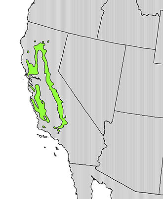 Quercus douglasii - Image: Quercus douglasii range map