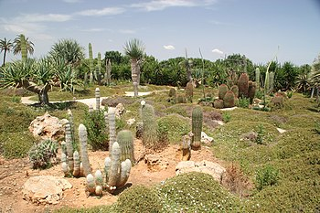 Botanicactus, cactus