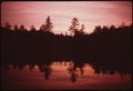 RED SPRUCE SILHOUETTED AGAINST SUNSET SKY AT TWITCHELL LAKE NORTHEAST OF OLD FORGE VILLAGE - NARA - 554397.tif