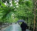 Rainy April day of Tehran (31023).jpg