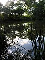 Reflection in the fishing pond - August 2011 - panoramio.jpg