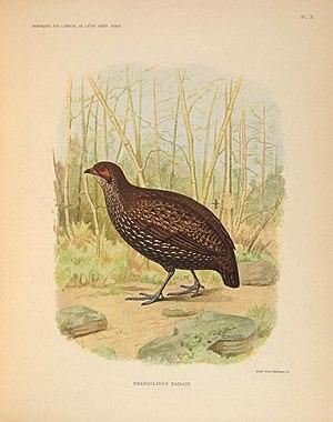 Nahan's partridge - Image: Remarques sur l'ornithologie de l'État indépendant du Congo (Pl. X) (7164291988)