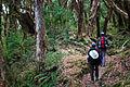 Rhododendron forest between Tarapani and Ghandruk (4525286841).jpg
