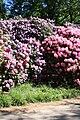 Rhododendronpark Bremen 20090513 111.JPG