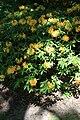 Rhododendronpark Bremen 20090513 259.JPG