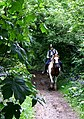 Rider using the Bridleway near Iverley - geograph.org.uk - 439361.jpg