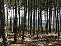Ridge Bridle Path Vistas Ispagnac Col de Montmirat 6332.JPG