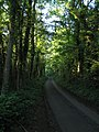 Road through Warleigh Wood - geograph.org.uk - 209887.jpg