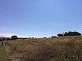 Rock-cornwall-england-tobefree-20150715-152721.jpg