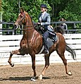 Rock Creek Spring Horse Show 2008 (2674577648).jpg