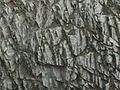 Rock texture stock photo.jpg