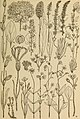 Rocky Mountain flowers - an illustrated guide for plant-lovers and plant-users (1920) (14598294398).jpg
