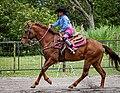Rodeo in Panama 11.jpg