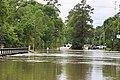 Roman Forest Flooding - 4-18-16 (26514892565).jpg