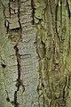 Rombergpark-100330-11395-Rinde.jpg