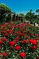Rose Garden Yatsu.jpg