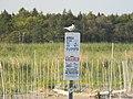 Roseate Tern on Refuge Sign at Rachel Carson National Wildlife Refuge (8577630185).jpg