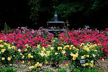 View Of The Rose Garden At Peak Bloom, Late April To Mid May