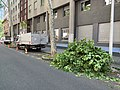 Rue de La Part-Dieu (Lyon) élagage des arbres (1).jpg