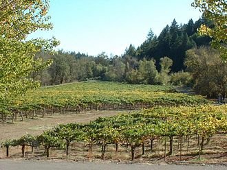 Russian River Valley AVA - A vineyard in the Russian River Valley AVA