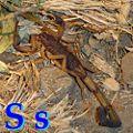 S Scorpion.jpg
