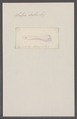 Salpa dubia - - Print - Iconographia Zoologica - Special Collections University of Amsterdam - UBAINV0274 092 08 0039.tif
